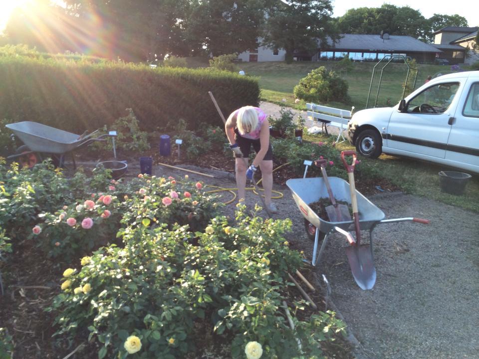 vårstell i hagen