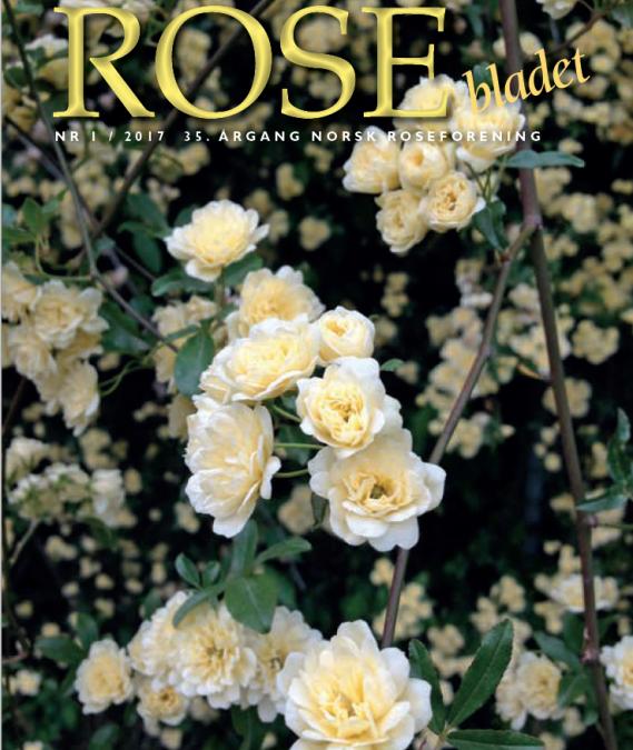 Rosebladet 1/2017