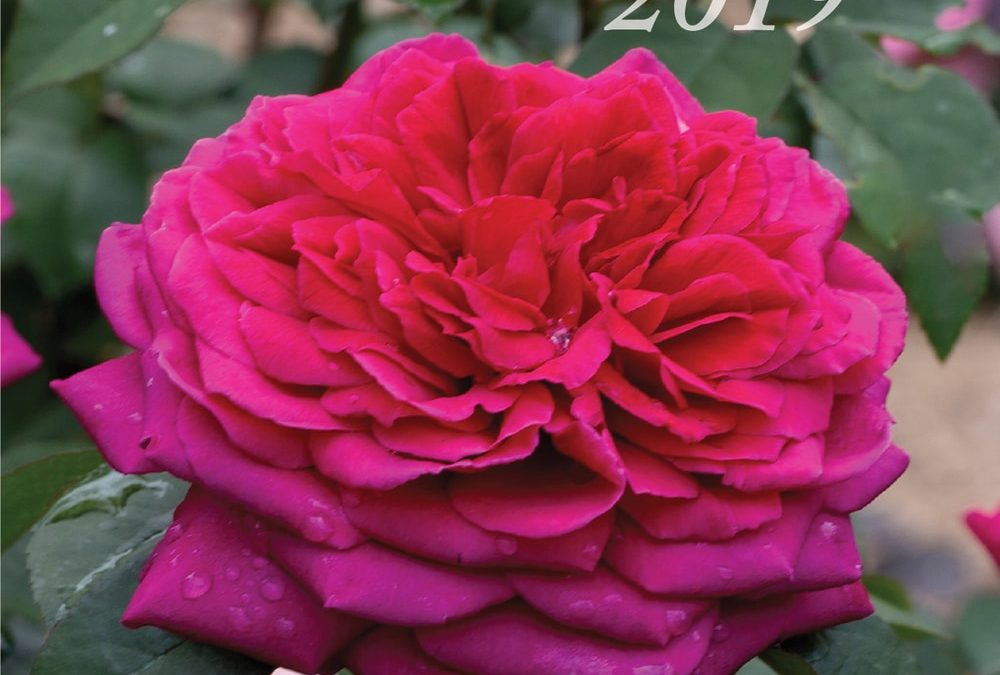 The Australian Rose Annual 2019
