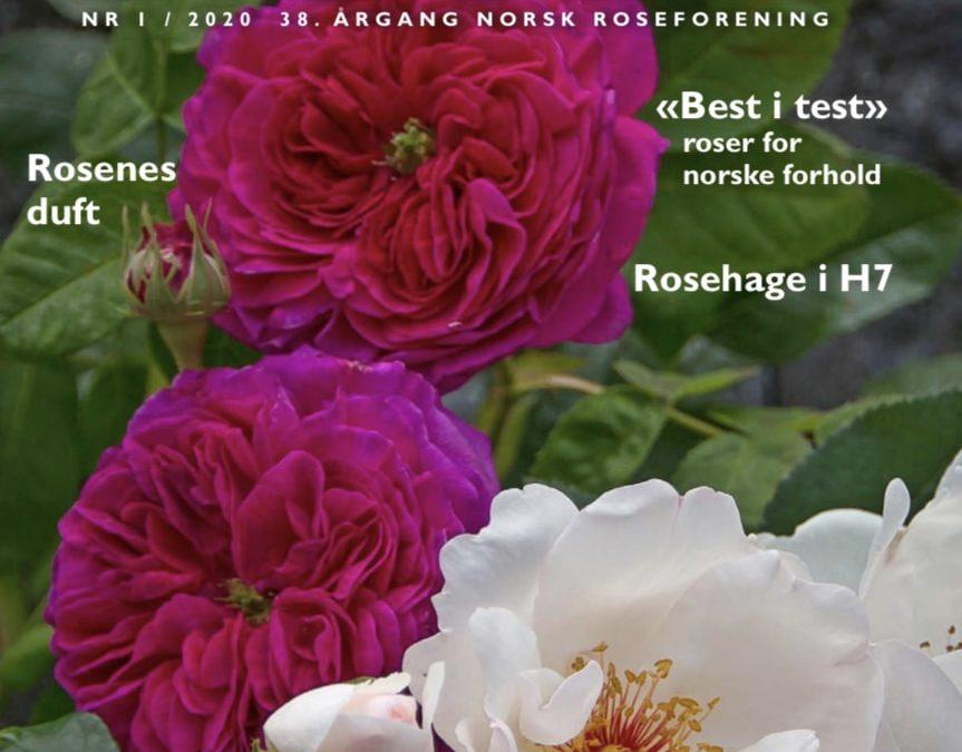 Rosebladet 1/2020